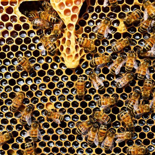 Bezpłatne szkolenia z zakresu pszczelarstwa